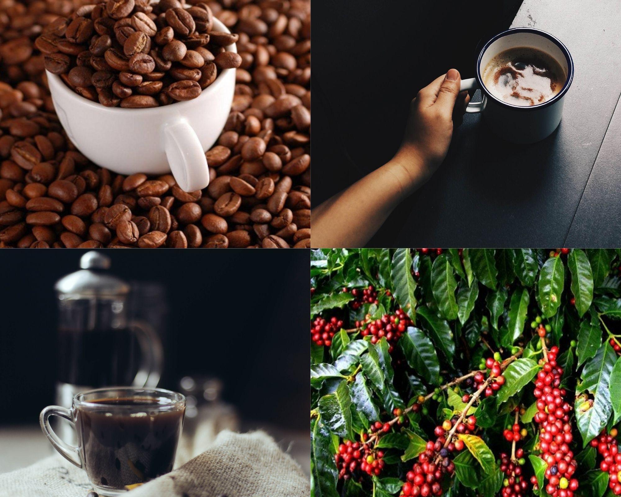 10 sự thật thú vị về cà phê có thể bạn chưa biết