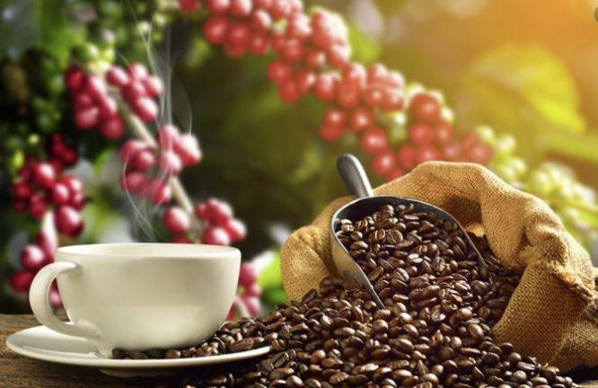 Sự khác biệt giữa cà phê hữu cơ và cà phê thông thường