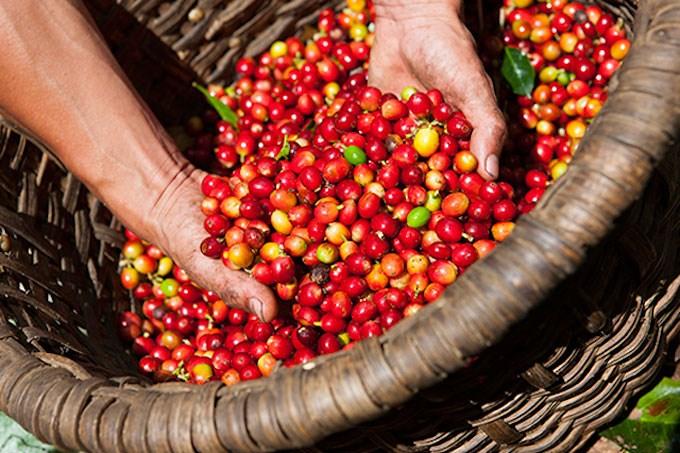 Giá cà phê thị trường hiện nay? Giá cà phê thay đổi có ảnh hưởng gì trong diễn biến tình hình Covid-19?