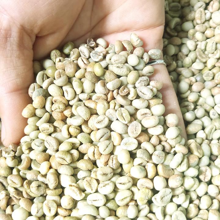 Cà phê nhân xanh và các phương pháp sơ chế cà phê