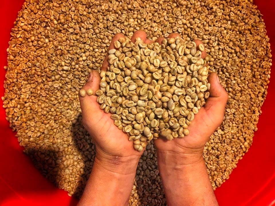 Cà phê Robusta Honey là gì và nguồn gốc của loại cà phê này?