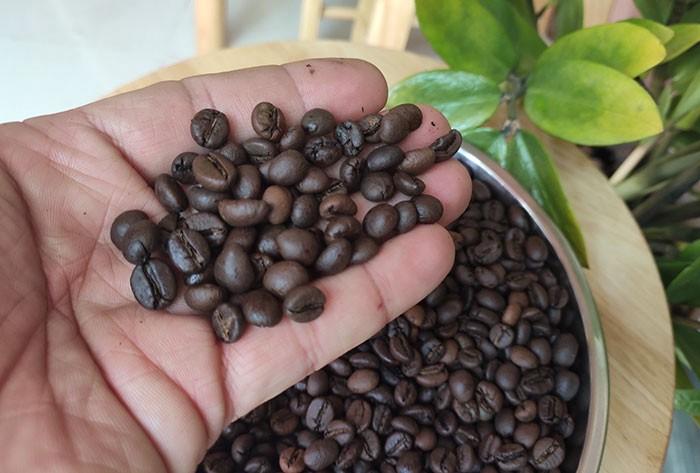 Ở đâu cung cấp cà phê hạt giá sỉ ngon