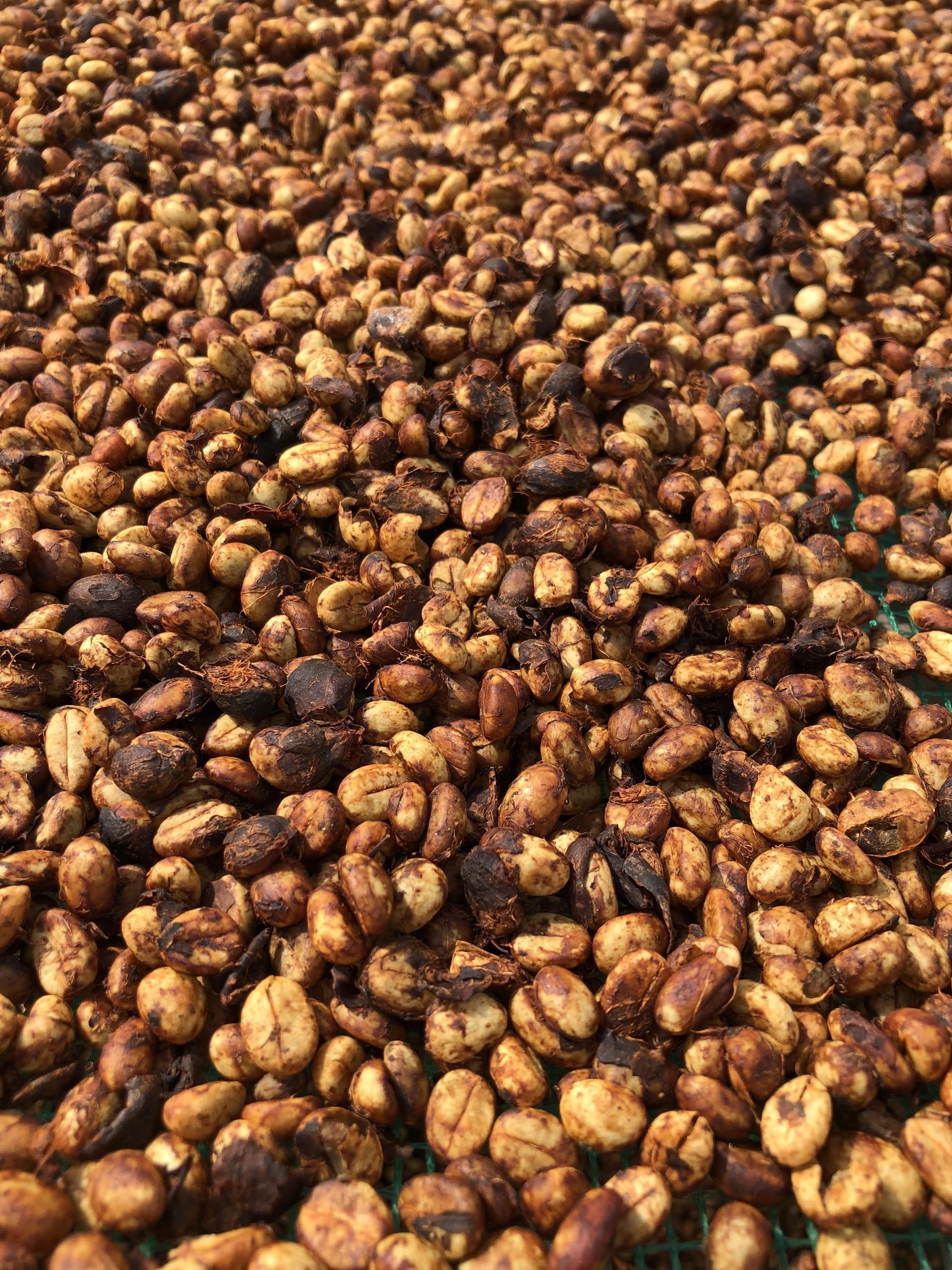 Bảng cà phê giá sỉ tại thị trường cà phê